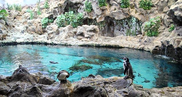 Loro Parque pingvin